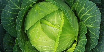 Molybden – pro metabolismus bílkovin