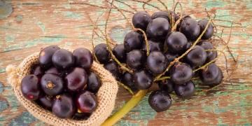 Acai – amazonský zdroj antioxidantů