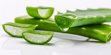 Aloe pravá – přírodní balzám pro Vaši pokožku