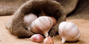 Česnek setý – všelék prověřený generacemi