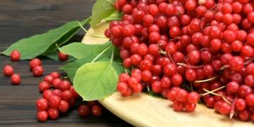 Klanopraška čínská – náhrada Vášeho šálku kávy