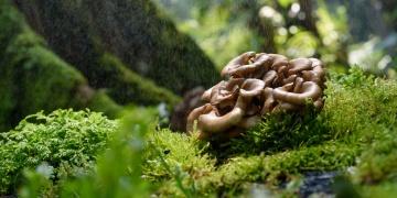 Medicinální houby – spolehlivá opora pro zdravé i nemocné